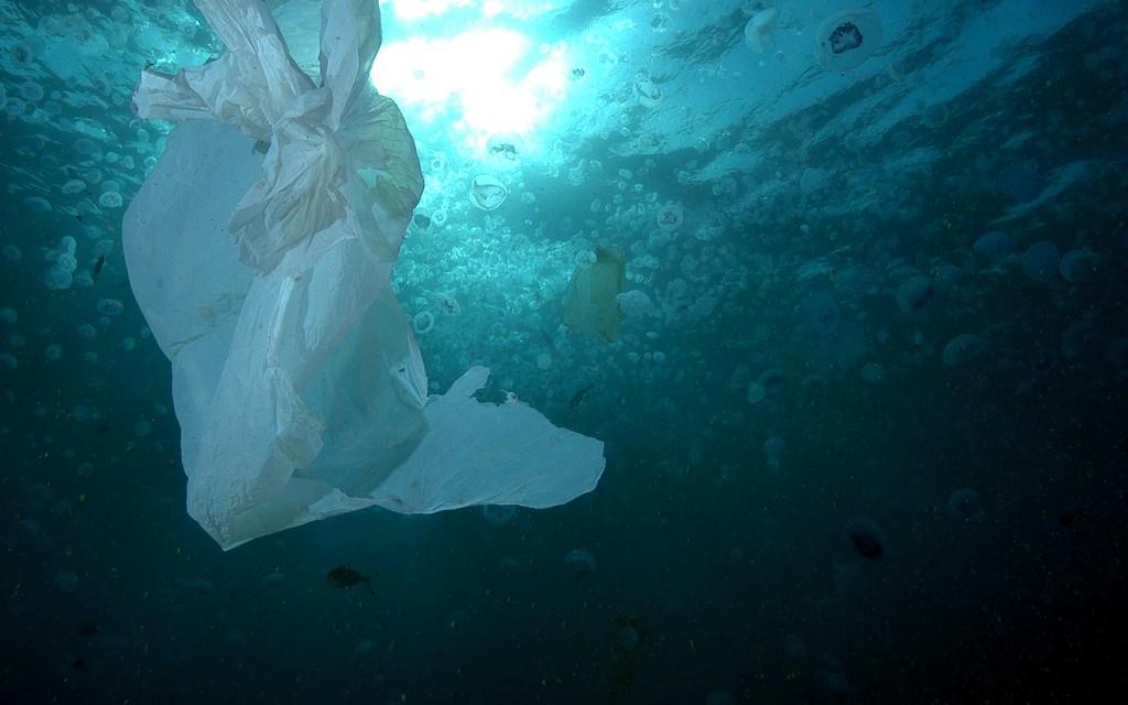 Bolsa hidrodegradables - mar- contaminación